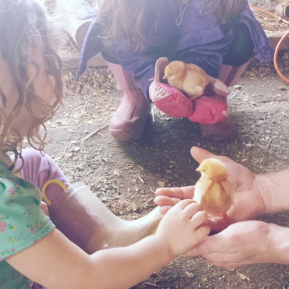15 Inspiring Reasons Why Your Kids Should Raise Chickens