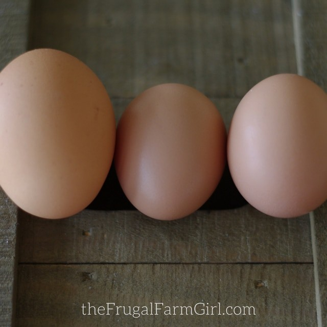 hen starts laying eggs