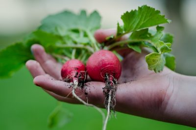 easy seeds to grow for fall harvest