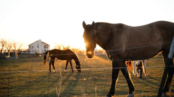 horsesblogimage