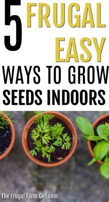 5 Cheap Ways to Grow Seeds Indoors