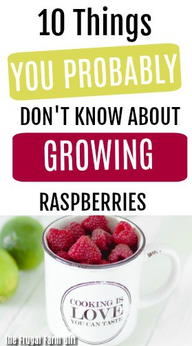 tips-growing-raspberries