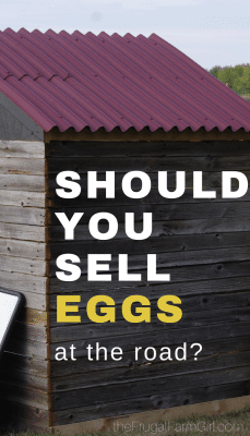 Wondering if you should sell your chicken eggs from your home? Try these helpful tips and tricks to get you started.