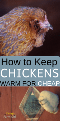 keep chickens warm in winter tips cheap frugal
