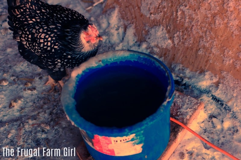 Keep your Chickens Warm the frugal way