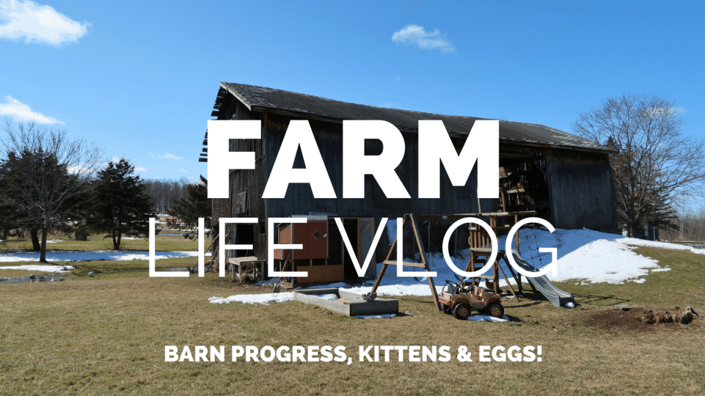 Farm Life Vlog Day 2: DIY Barn Building Progress & Kittens