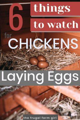 hens lay eggs longer