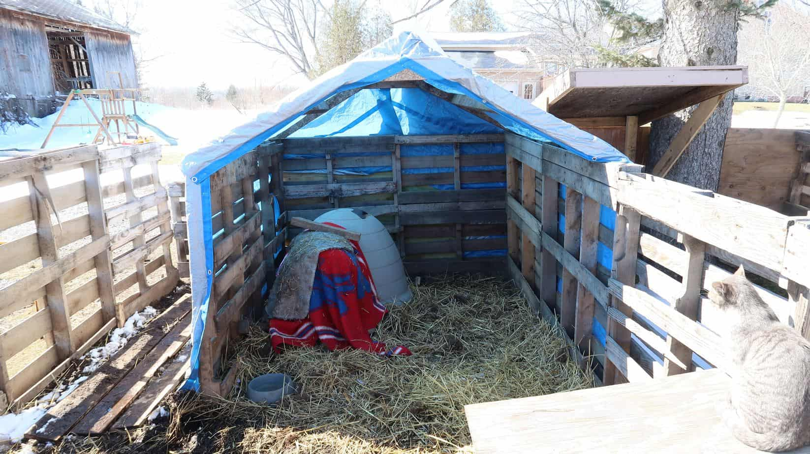 outdoor-shelter-pigs-winter