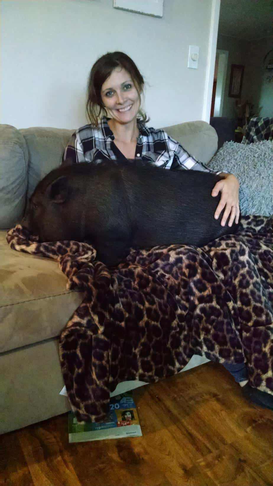 things you had no idea pigs love