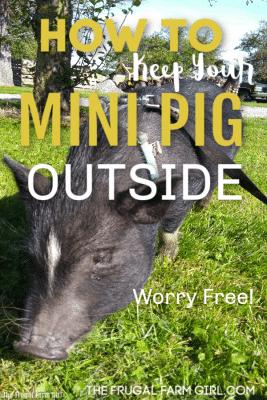 pig outside tips