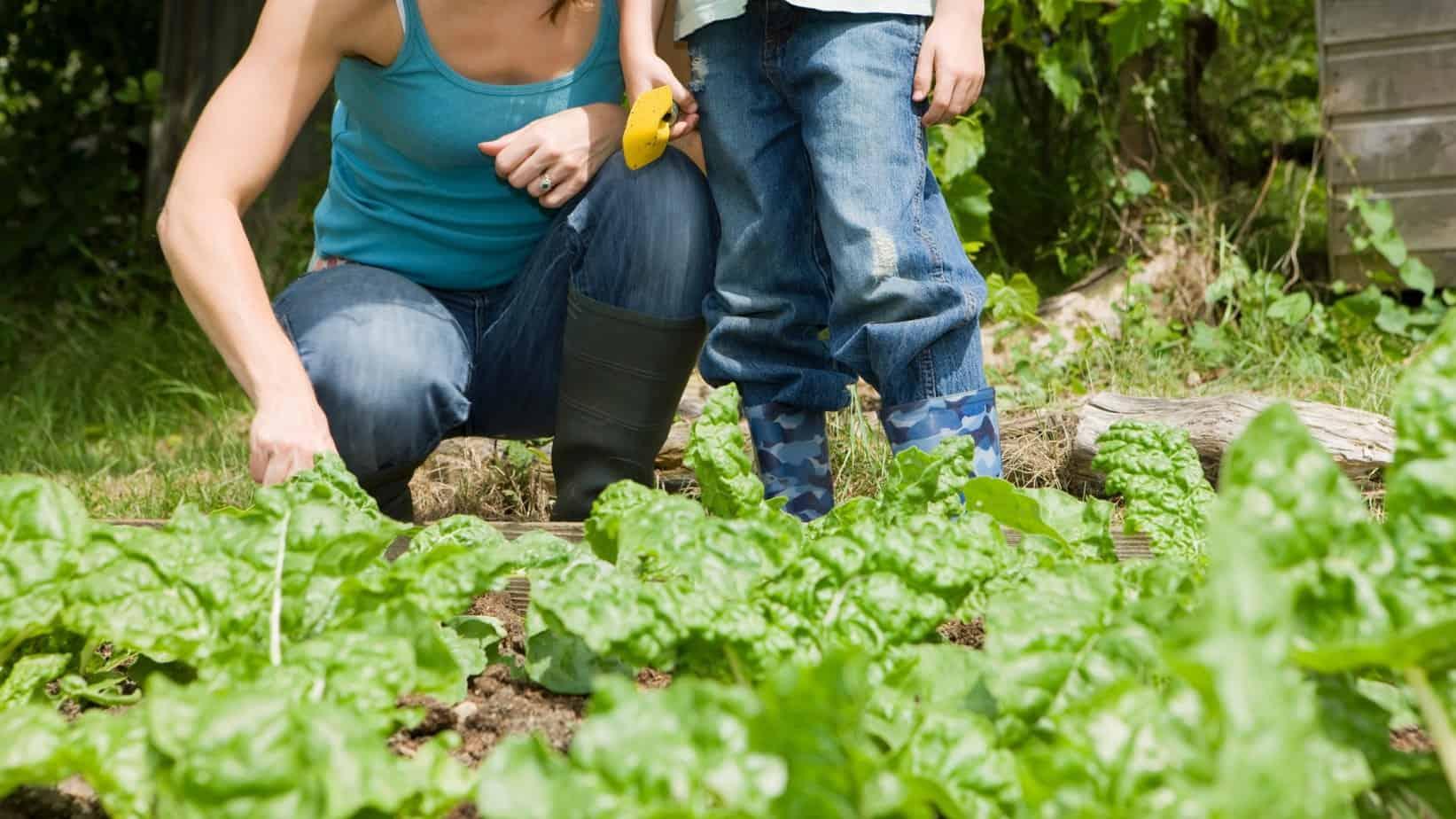 5 Free Ways to Design Your Vegetable Garden