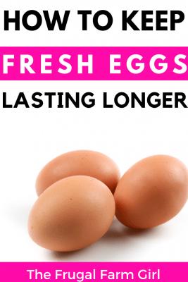 keep chicken eggs clean