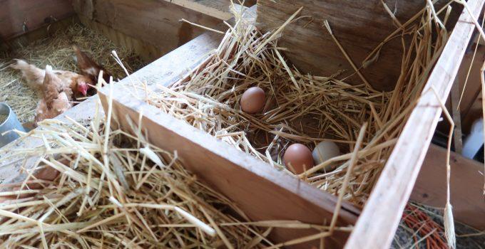 chicken egg nesting box