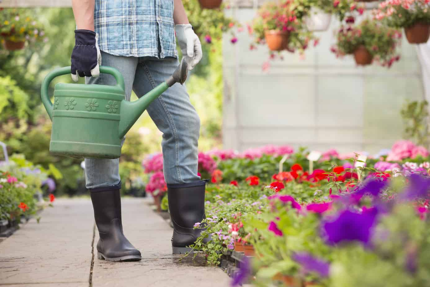 How to Start A Flower Garden On A Budget