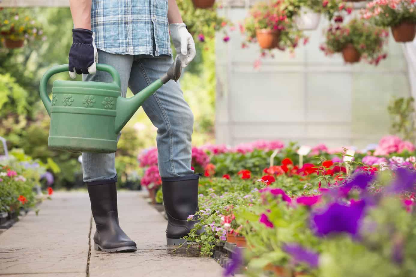 How to Start A Flower Garden On A Budget