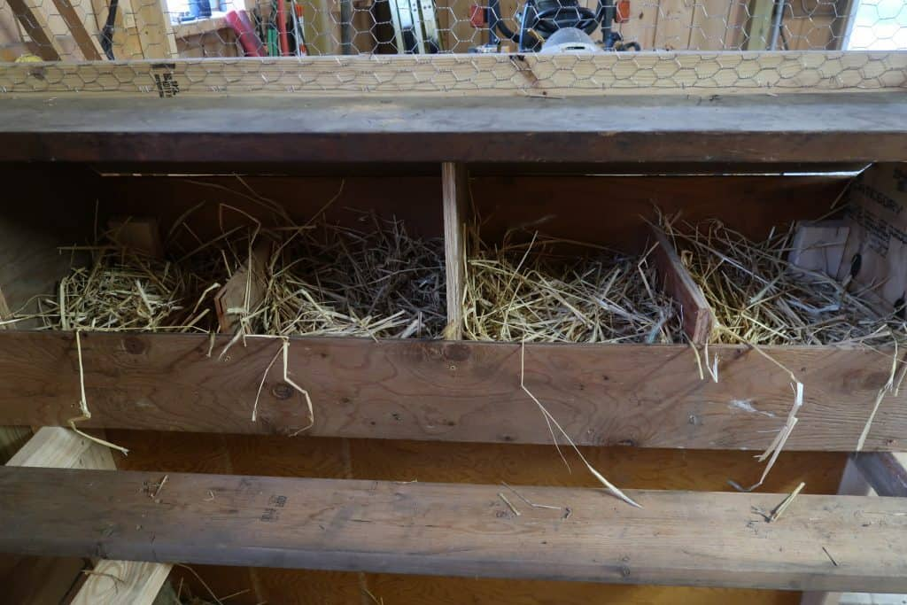 chickens nesting box
