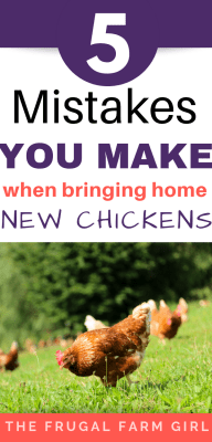 Here are the most common mistakes you will make when you bring home new chickens. Raising chickens is easy when you understand the basics.