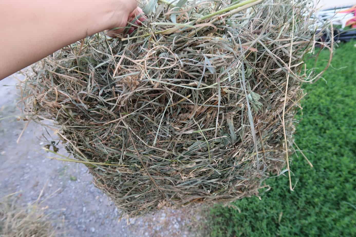 Here's How Frugal Folks Find & Bale Hay