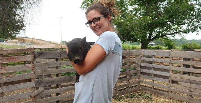 how to pick up a baby mini pig