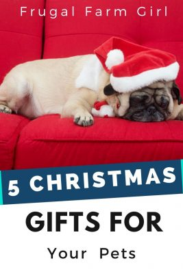 Gifts to Give your Furry Friend for Christmas