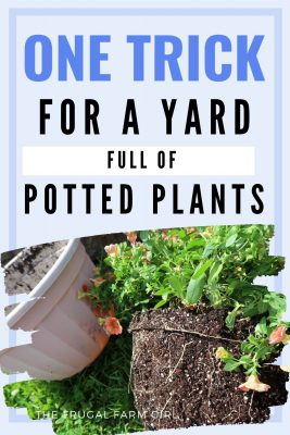 Frugal Ways to Decorate Your Yard with Potted Plants