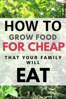 7 Easy Foods To Grow From Seeds For Cheap