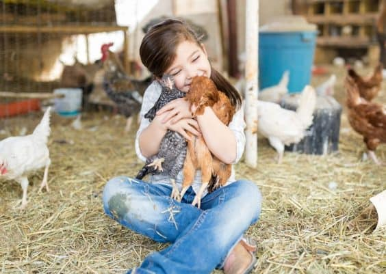 best farm animals for beginners