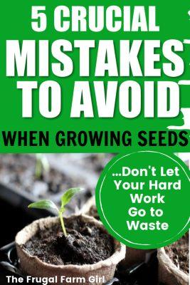 mistakes growing seeds indoors