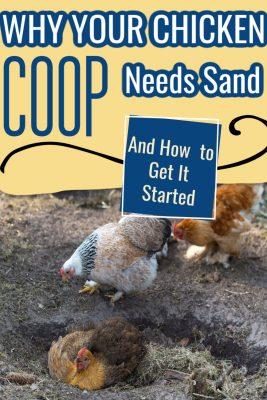 chicken coop needs sand