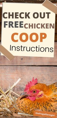 Check Out Free Chicken Coop Instructions