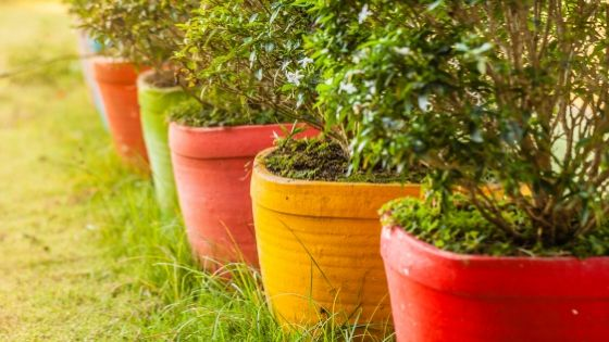 6 Reasons Container Gardening is the Best Way to Grow Plants