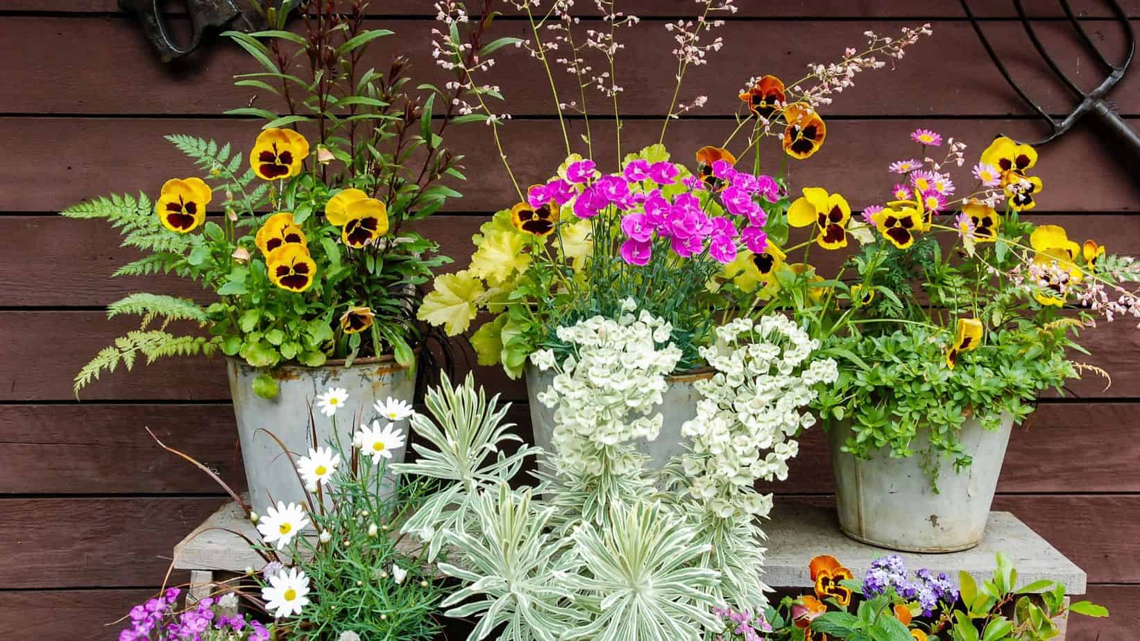 best spot for container gardening