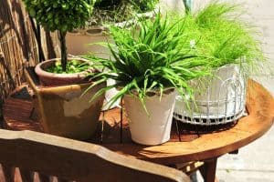 why container gardening is the best