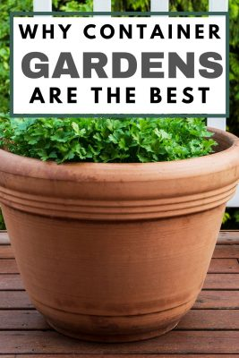 why container gardens are the best