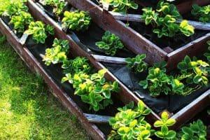 planning container garden