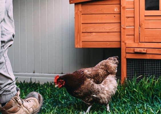 portable chicken coop ideas
