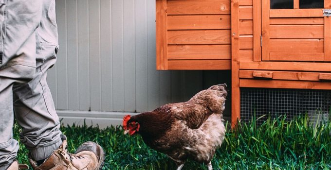 portable chicken coop ideas