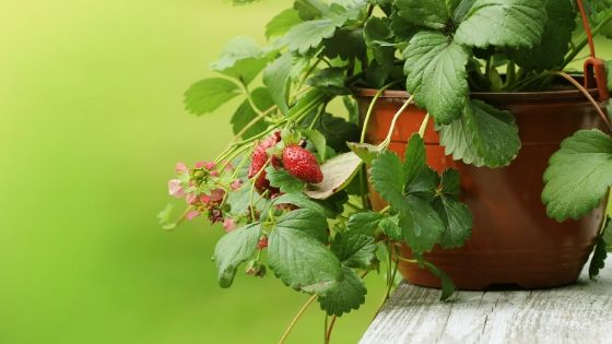 How to Choose Plants for Your Container Garden