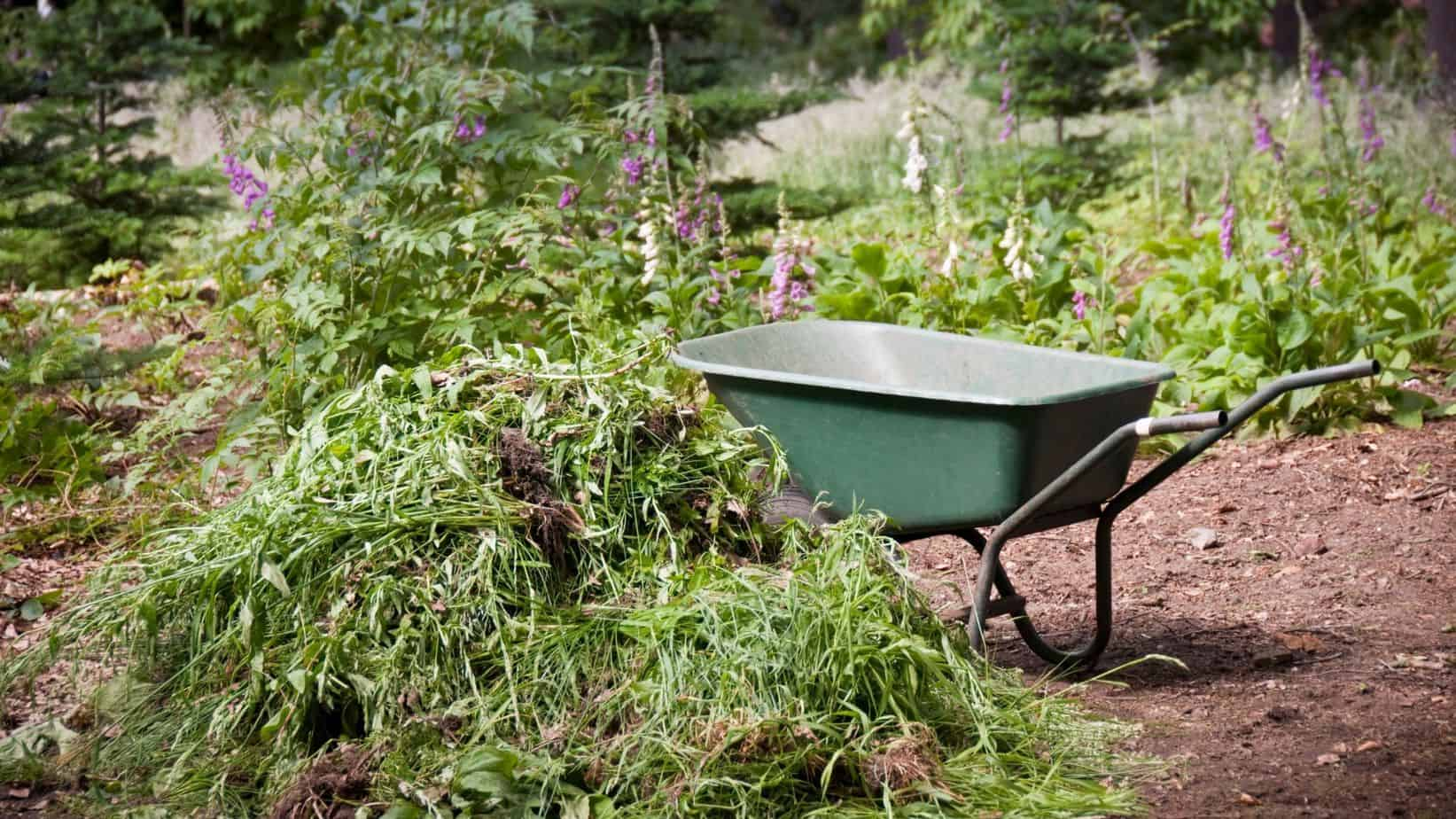 how to clear your garden of weeds